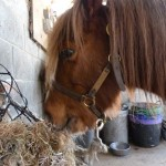 meet the ponies at Glebe Field riding stables