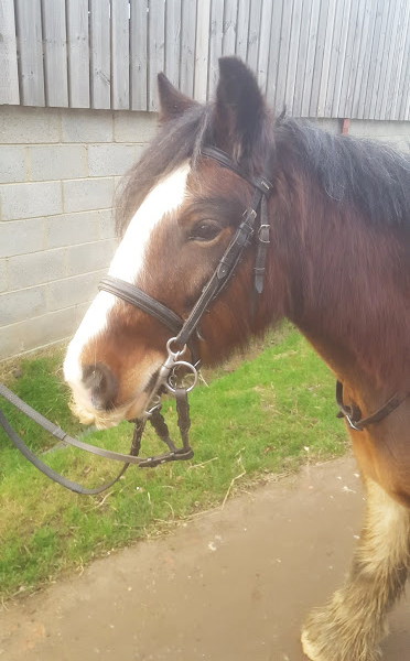 Meet the horses and ponies at Glebe Field Riding Stables near